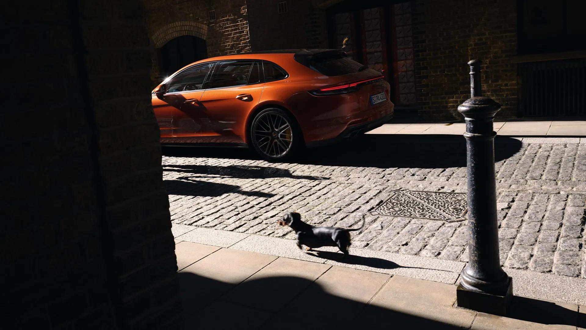 Mäyräkoira Porsche Panameran edessä.